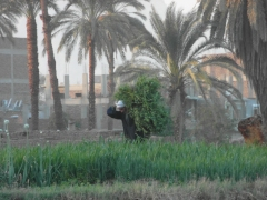 Egypt February 2013 321