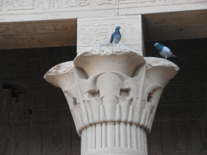 Pigeons at Philae